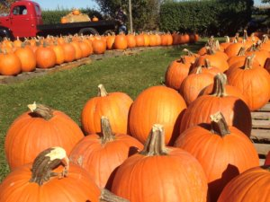 It's the Great Pumpkin, Hancock County! Find your pumpkins and more Fall Staples at these Hancock County locations! • VisitFindlay.com